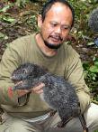 Гигантские крысы обитают в кратере горы Босави