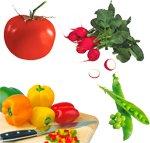 Немытые овощи могут вызвать лептоспироз
