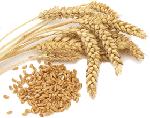 Зерновые и бобовые продукты питания