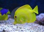 Анималотерапия (Аквариум: рыбки)