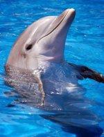 Анималотерапия (Дельфины)