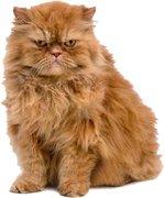 Анималотерапия (Кошки)