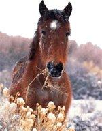 Анималотерапия (Лошади)