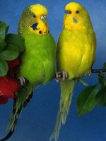 Анималотерапия (Птички: попугаи, канарейки и другие)