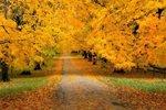 Осень – время лечиться алоэ